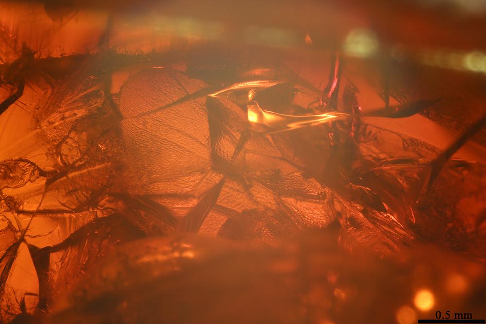 http://mczbase.mcz.harvard.edu/specimen_images/entomology/paleo/large/PALE-17825_Hymenoptera_2.jpg