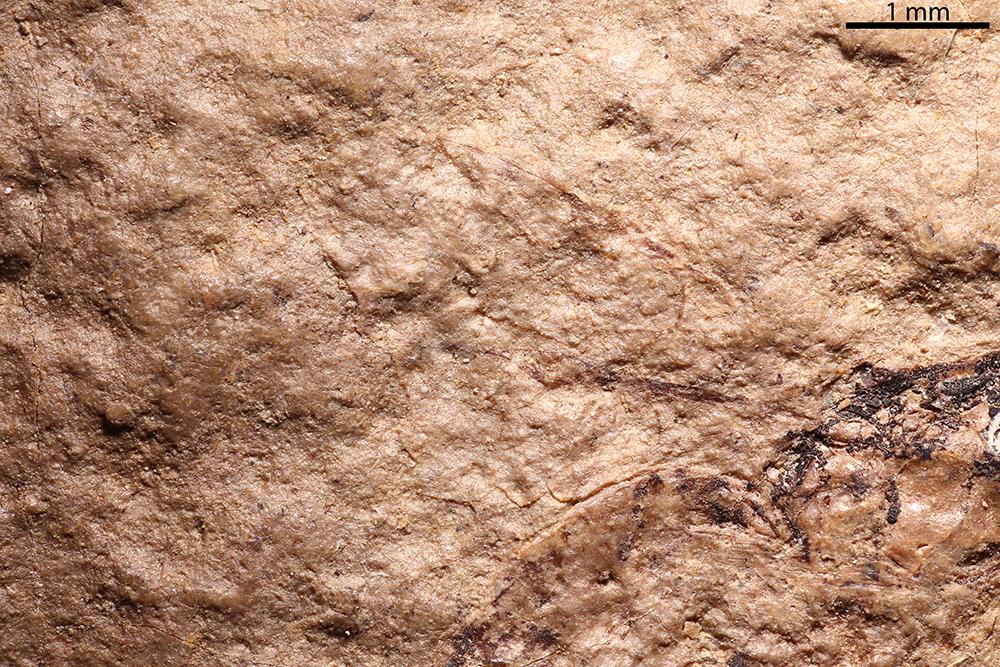 http://mczbase.mcz.harvard.edu/specimen_images/entomology/paleo/large/PALE-2134_Polysphincta_mortuaria_holotype_1.jpg