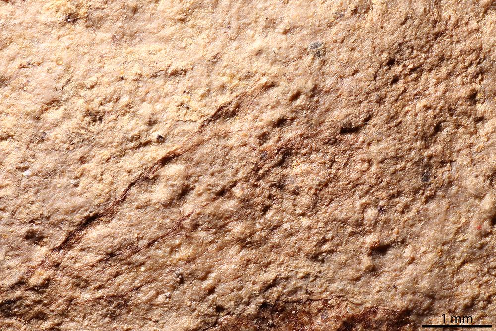http://mczbase.mcz.harvard.edu/specimen_images/entomology/paleo/large/PALE-2135_Polysphincta_inundata_holotype_4.jpg