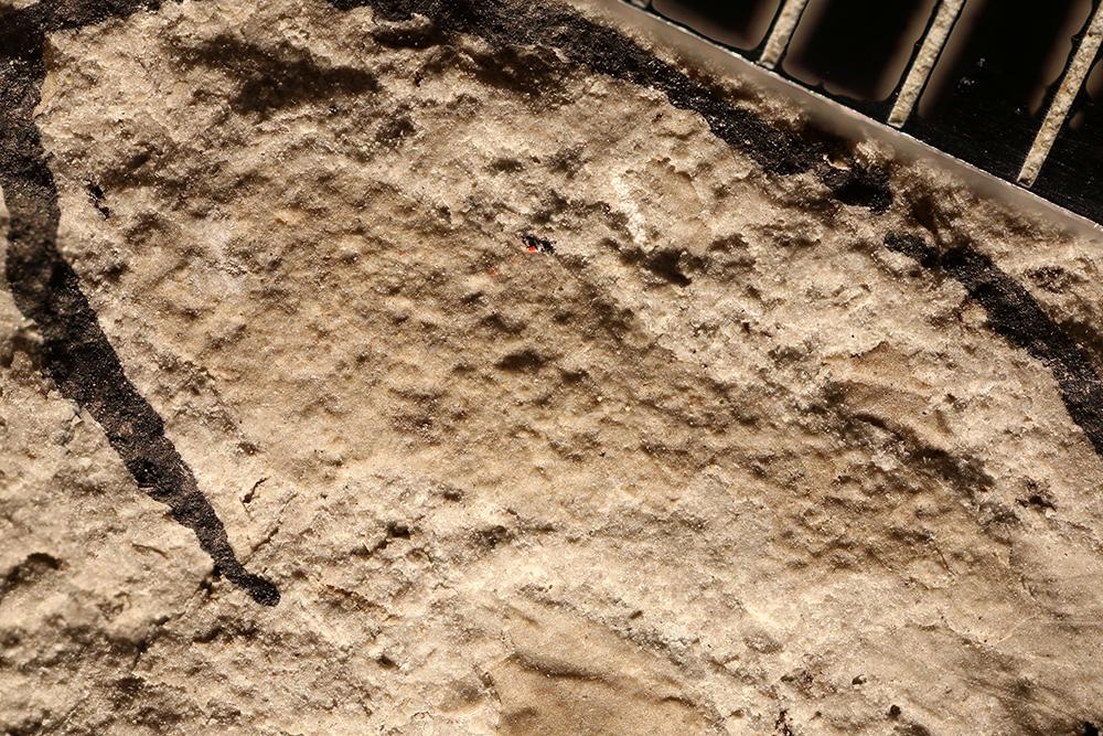http://mczbase.mcz.harvard.edu/specimen_images/entomology/paleo/large/PALE-29356_Undetermined_undetermined.jpg