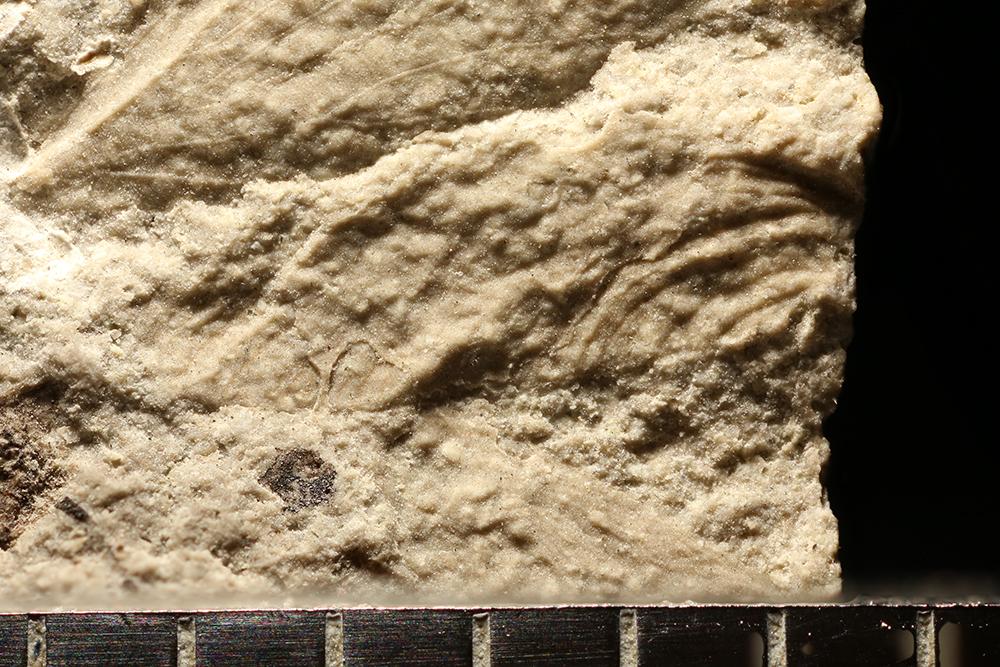 http://mczbase.mcz.harvard.edu/specimen_images/entomology/paleo/large/PALE-29378_Ephemeroptera.jpg