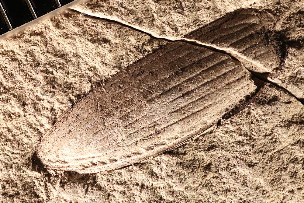 http://mczbase.mcz.harvard.edu/specimen_images/entomology/paleo/large/PALE-2944_Pterostichus_fernquisti_holotype.jpg