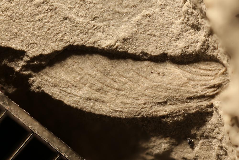 http://mczbase.mcz.harvard.edu/specimen_images/entomology/paleo/large/PALE-29461_Ephemeroptera.jpg