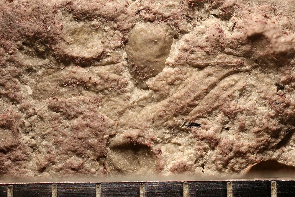http://mczbase.mcz.harvard.edu/specimen_images/entomology/paleo/large/PALE-29529_Psocoptera.jpg