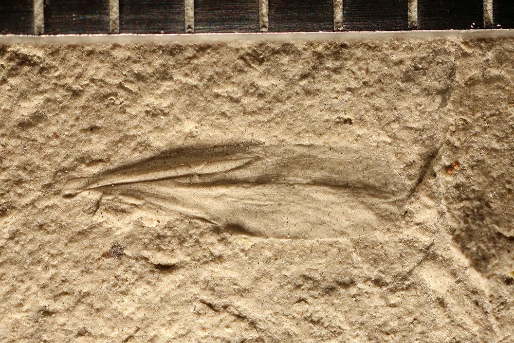 http://mczbase.mcz.harvard.edu/specimen_images/entomology/paleo/large/PALE-29563_Psocoptera.jpg