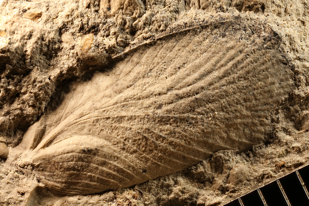 http://mczbase.mcz.harvard.edu/specimen_images/entomology/paleo/large/PALE-29761_Blattaria.jpg