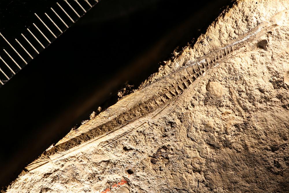 http://mczbase.mcz.harvard.edu/specimen_images/entomology/paleo/large/PALE-29813_Orthoptera.jpg