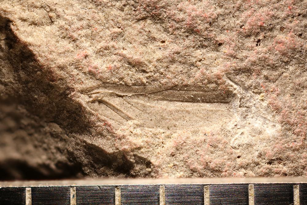 http://mczbase.mcz.harvard.edu/specimen_images/entomology/paleo/large/PALE-29913_Hemiptera.jpg