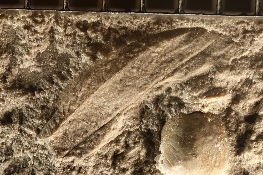 http://mczbase.mcz.harvard.edu/specimen_images/entomology/paleo/large/PALE-29926_Glosselytrodea_qm.jpg