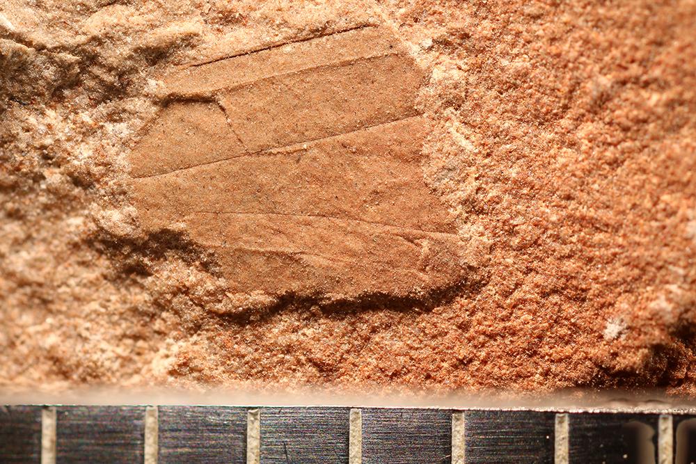 http://mczbase.mcz.harvard.edu/specimen_images/entomology/paleo/large/PALE-29982_Caloneurodea_qm.jpg