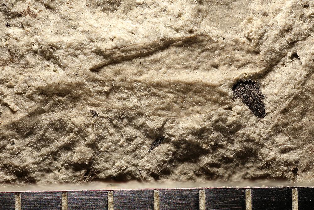 http://mczbase.mcz.harvard.edu/specimen_images/entomology/paleo/large/PALE-30377_Psocoptera.jpg
