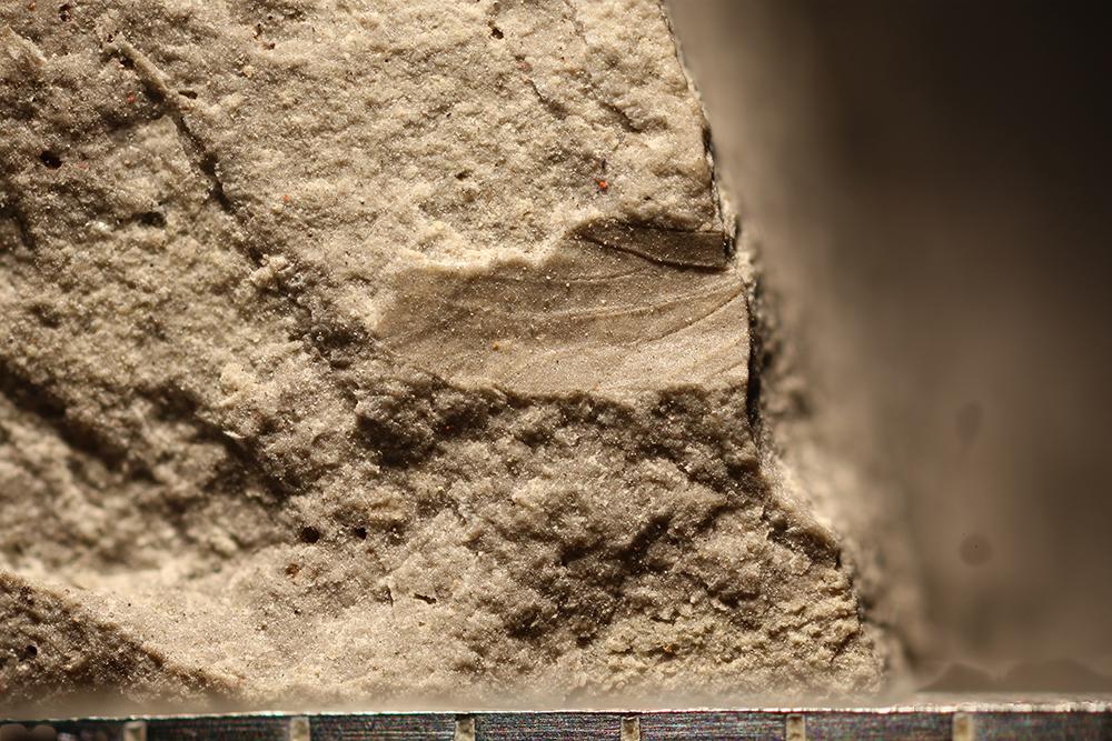 http://mczbase.mcz.harvard.edu/specimen_images/entomology/paleo/large/PALE-30522_Hemiptera.jpg