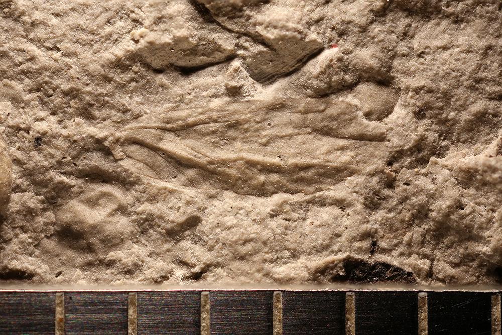 http://mczbase.mcz.harvard.edu/specimen_images/entomology/paleo/large/PALE-30717_Psocoptera.jpg