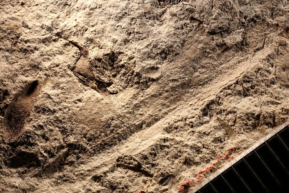 http://mczbase.mcz.harvard.edu/specimen_images/entomology/paleo/large/PALE-30749_Caloneurodea_qm.jpg