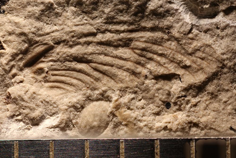 http://mczbase.mcz.harvard.edu/specimen_images/entomology/paleo/large/PALE-30975_Ephemeroptera.jpg
