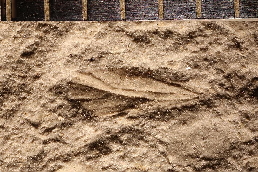 http://mczbase.mcz.harvard.edu/specimen_images/entomology/paleo/large/PALE-31023_Psocoptera.jpg
