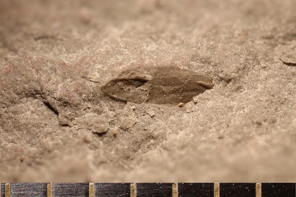 http://mczbase.mcz.harvard.edu/specimen_images/entomology/paleo/large/PALE-31035_Pterygota.jpg