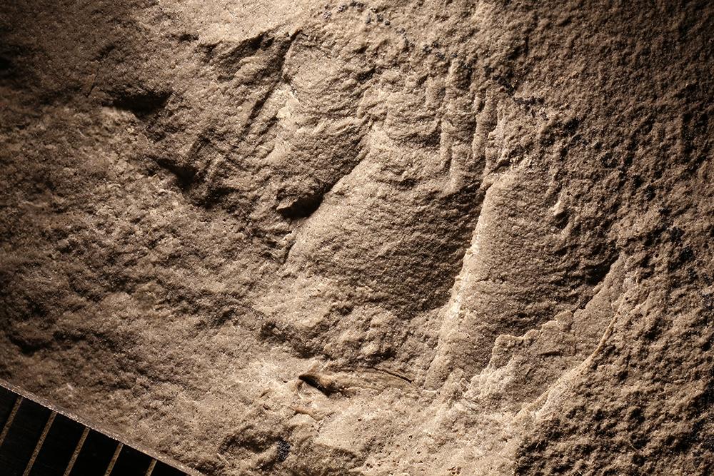 http://mczbase.mcz.harvard.edu/specimen_images/entomology/paleo/large/PALE-31047_Arthropoda.jpg