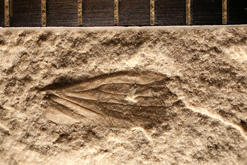 http://mczbase.mcz.harvard.edu/specimen_images/entomology/paleo/large/PALE-31118_Miomoptera.jpg