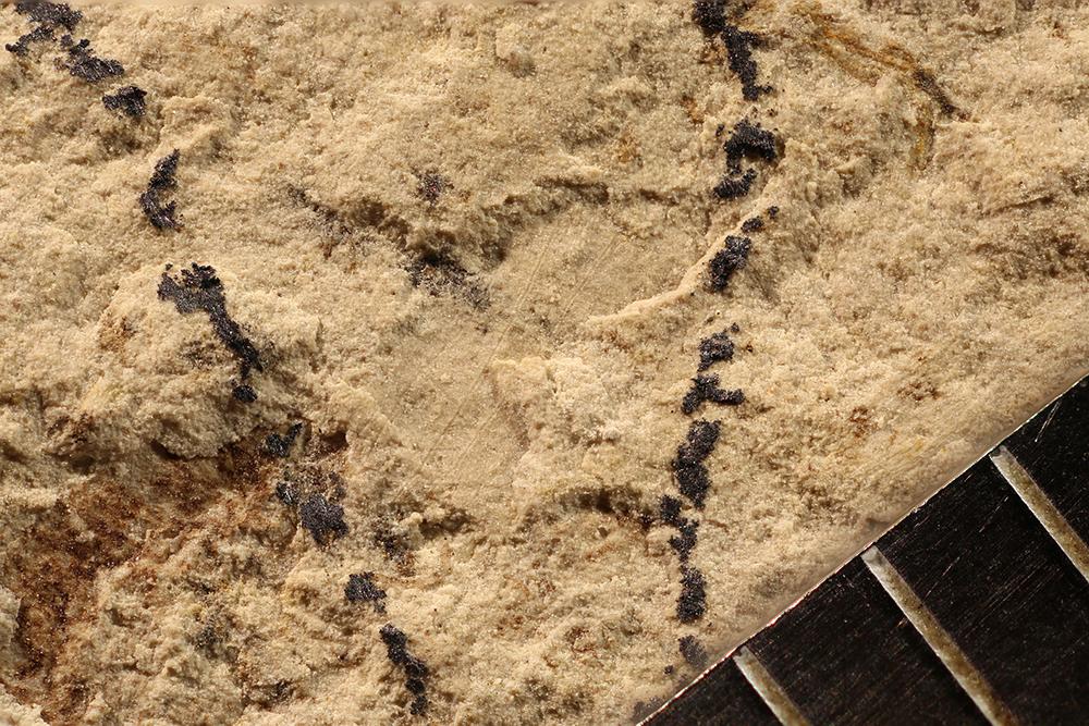 http://mczbase.mcz.harvard.edu/specimen_images/entomology/paleo/large/PALE-31268_Pterygota.jpg