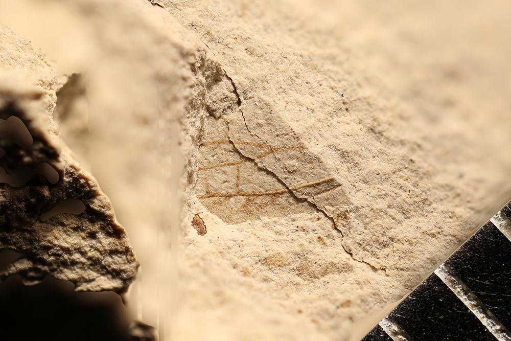 http://mczbase.mcz.harvard.edu/specimen_images/entomology/paleo/large/PALE-31357_Lemmatophora_sp.jpg