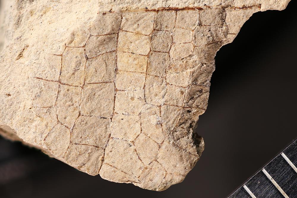 http://mczbase.mcz.harvard.edu/specimen_images/entomology/paleo/large/PALE-31586_Meganisoptera.jpg