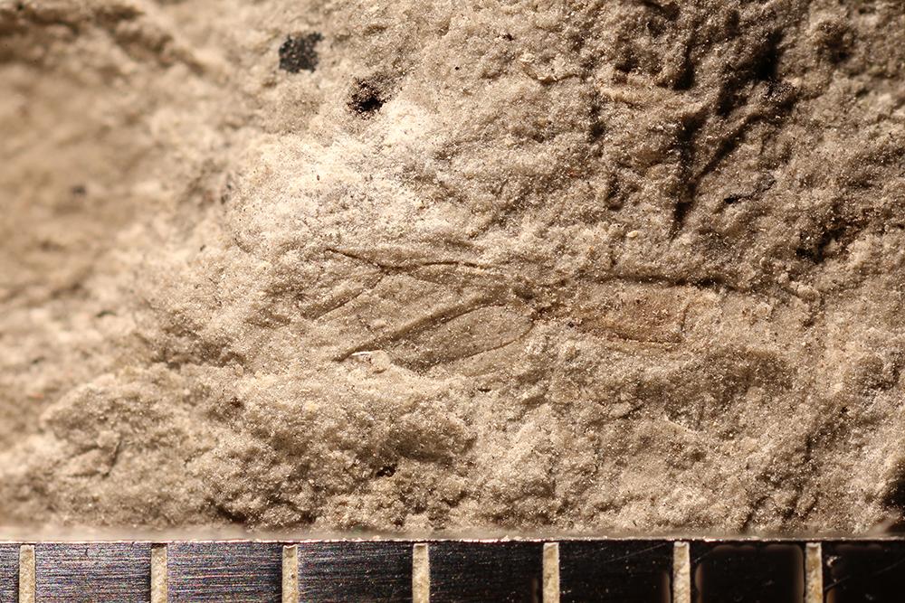 http://mczbase.mcz.harvard.edu/specimen_images/entomology/paleo/large/PALE-31596_Hemiptera.jpg