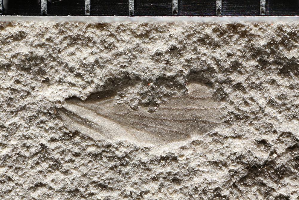 http://mczbase.mcz.harvard.edu/specimen_images/entomology/paleo/large/PALE-31770_Miomoptera.jpg