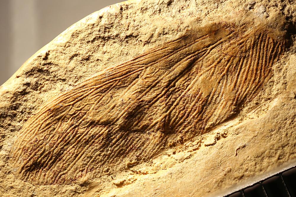 http://mczbase.mcz.harvard.edu/specimen_images/entomology/paleo/large/PALE-31814_Isoptera.jpg