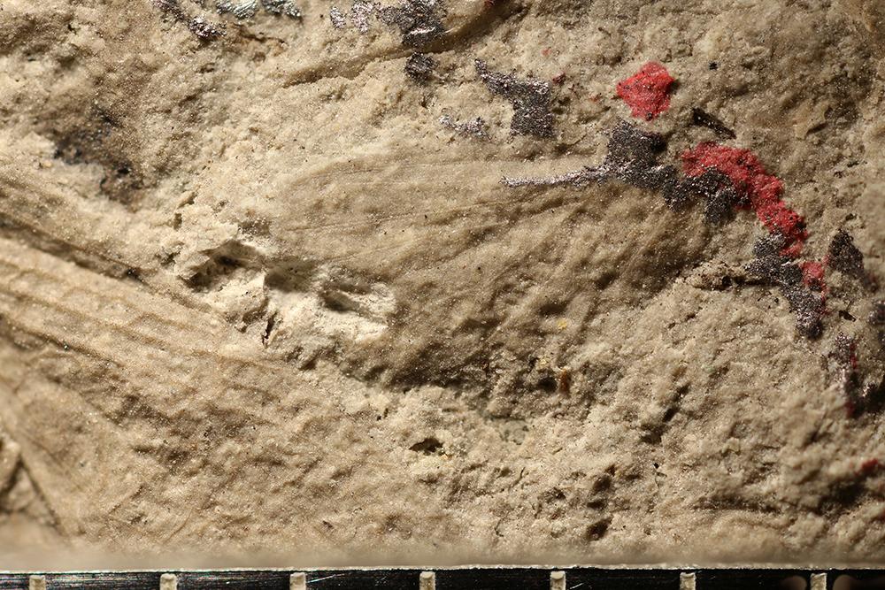http://mczbase.mcz.harvard.edu/specimen_images/entomology/paleo/large/PALE-31881_Lemmatophoridae.jpg