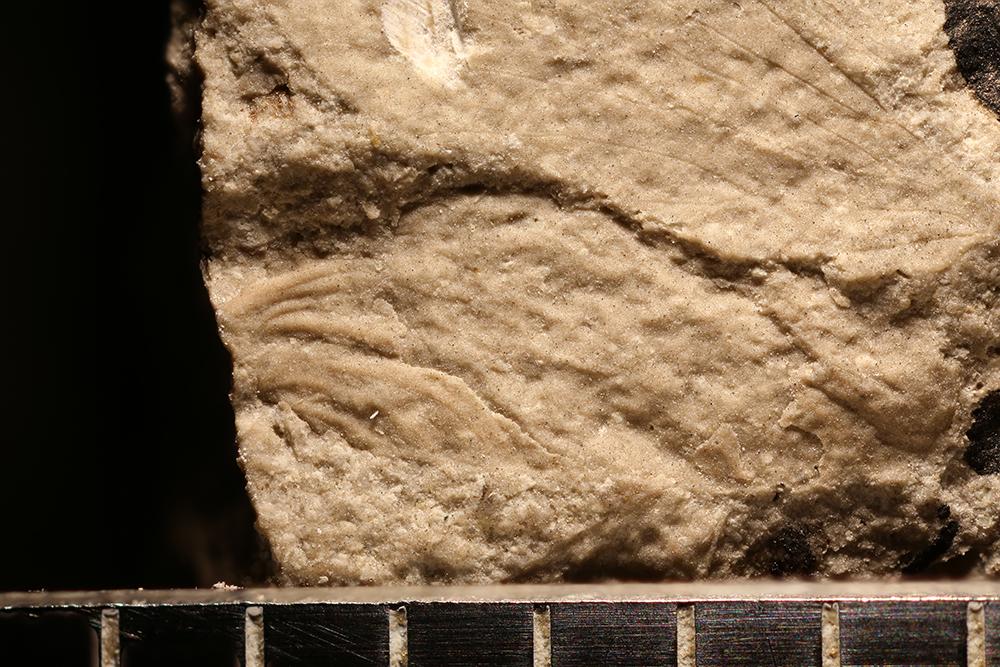 http://mczbase.mcz.harvard.edu/specimen_images/entomology/paleo/large/PALE-31934_Ephemeroptera.jpg