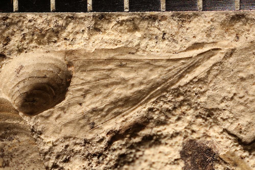 http://mczbase.mcz.harvard.edu/specimen_images/entomology/paleo/large/PALE-31961_Grylloblattodea.jpg