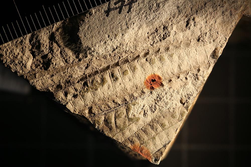 http://mczbase.mcz.harvard.edu/specimen_images/entomology/paleo/large/PALE-31979_Meganisoptera.jpg