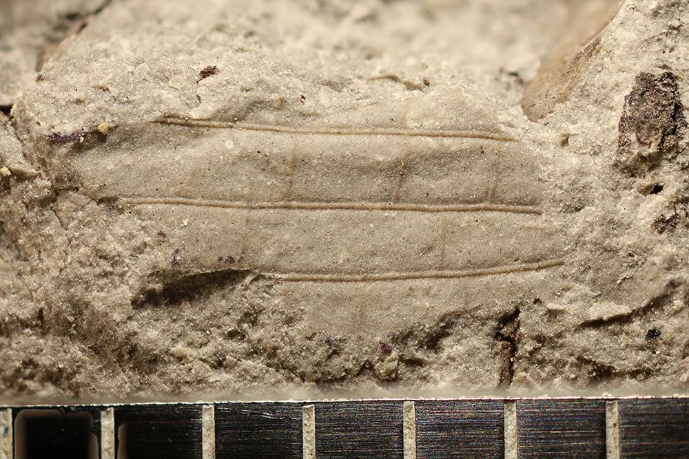 http://mczbase.mcz.harvard.edu/specimen_images/entomology/paleo/large/PALE-32027_Pterygota.jpg