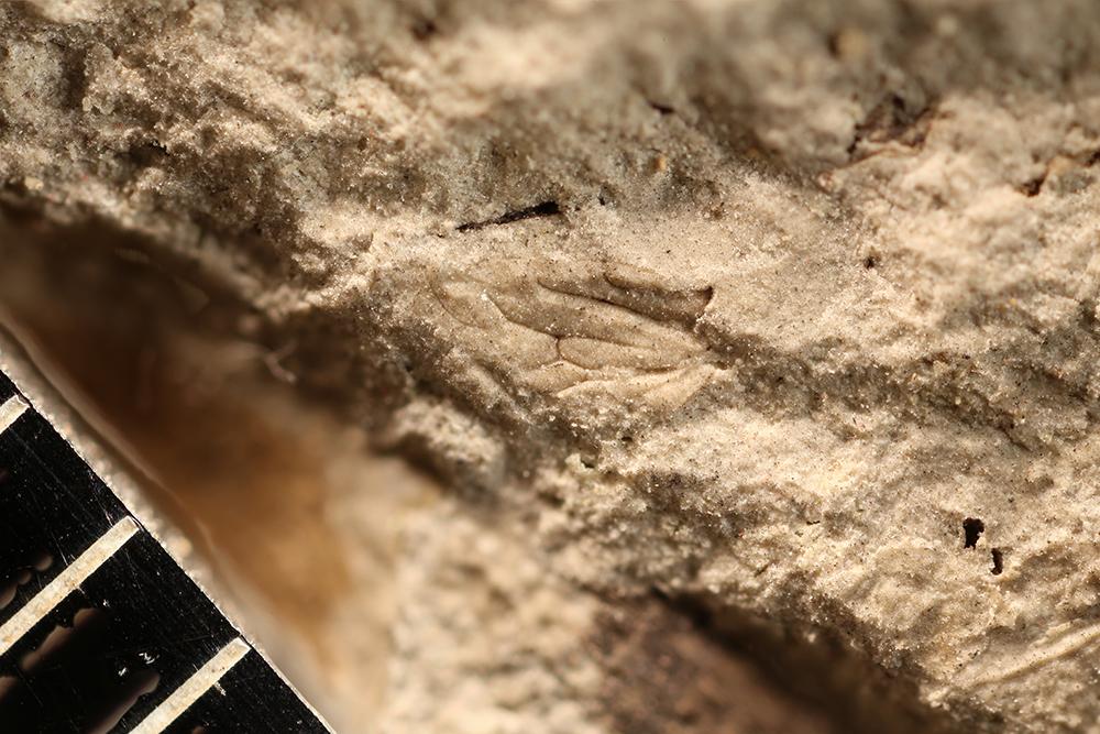 http://mczbase.mcz.harvard.edu/specimen_images/entomology/paleo/large/PALE-32037_Hemiptera.jpg
