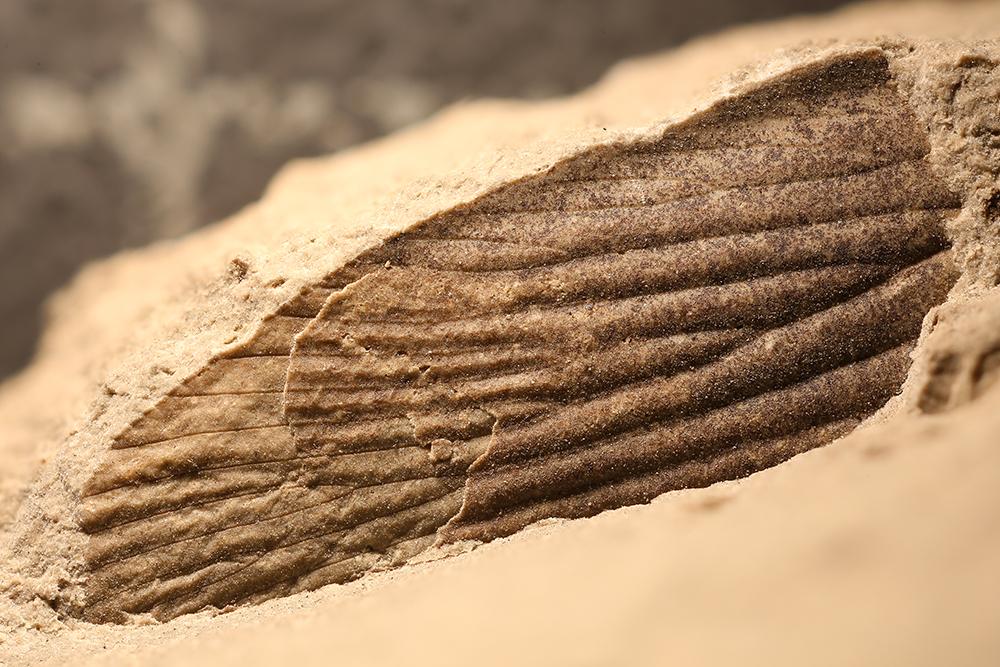 http://mczbase.mcz.harvard.edu/specimen_images/entomology/paleo/large/PALE-32227_Blattaria.jpg