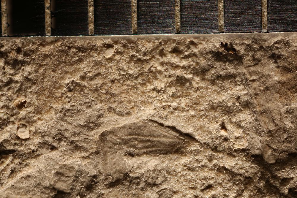 http://mczbase.mcz.harvard.edu/specimen_images/entomology/paleo/large/PALE-32229_Pterygota.jpg