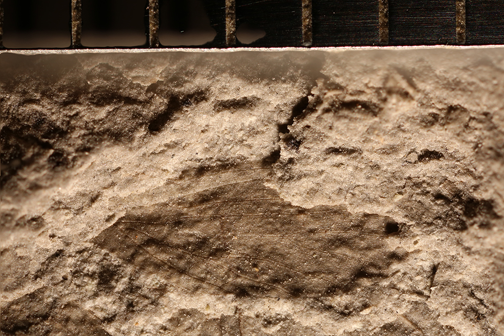http://mczbase.mcz.harvard.edu/specimen_images/entomology/paleo/large/PALE-32257_Lemmatophoridae.jpg