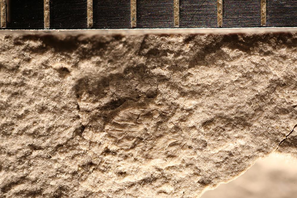 http://mczbase.mcz.harvard.edu/specimen_images/entomology/paleo/large/PALE-32275_Psocoptera.jpg