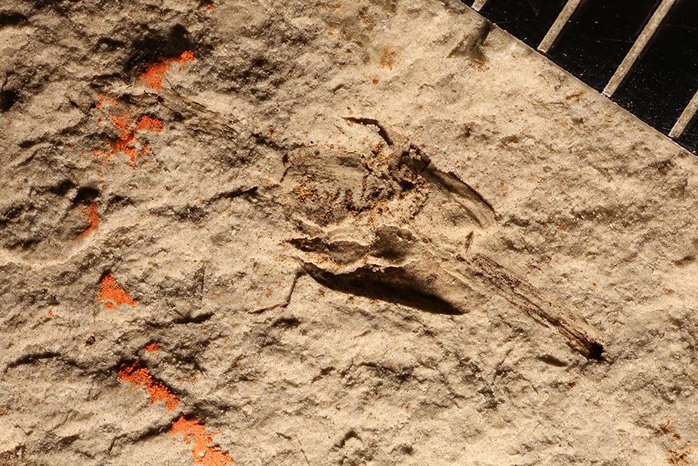 http://mczbase.mcz.harvard.edu/specimen_images/entomology/paleo/large/PALE-32279_Plantae_qm.jpg