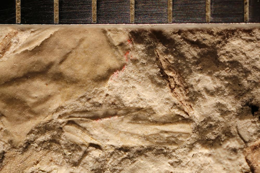 http://mczbase.mcz.harvard.edu/specimen_images/entomology/paleo/large/PALE-32301_Hemiptera.jpg