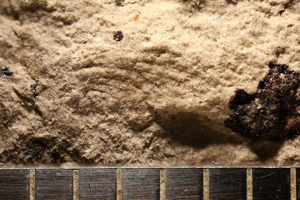 http://mczbase.mcz.harvard.edu/specimen_images/entomology/paleo/large/PALE-32313_Ephemeroptera.jpg