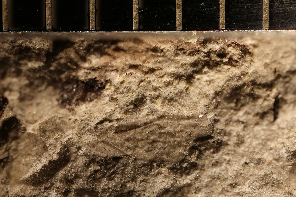 http://mczbase.mcz.harvard.edu/specimen_images/entomology/paleo/large/PALE-32351_Hemiptera.jpg
