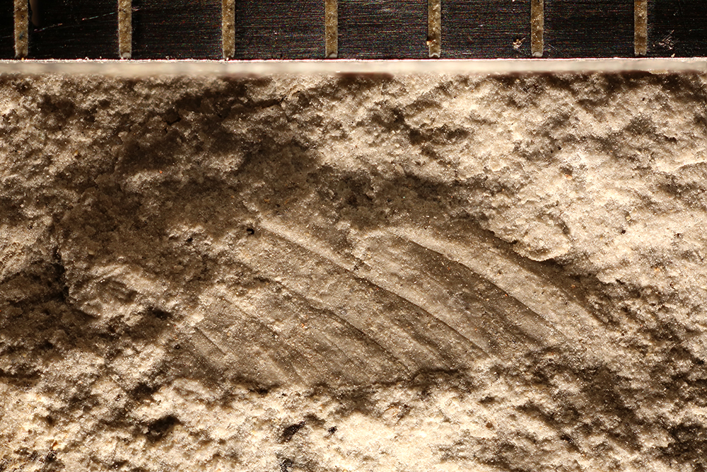 http://mczbase.mcz.harvard.edu/specimen_images/entomology/paleo/large/PALE-32395_Ephemeroptera.jpg