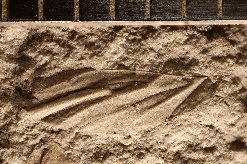 http://mczbase.mcz.harvard.edu/specimen_images/entomology/paleo/large/PALE-32404_Asthenohymen_sp.jpg