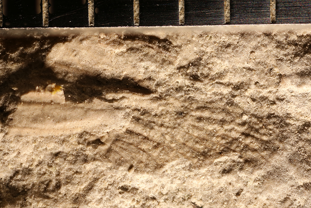 http://mczbase.mcz.harvard.edu/specimen_images/entomology/paleo/large/PALE-32580_Ephemeroptera_2.jpg