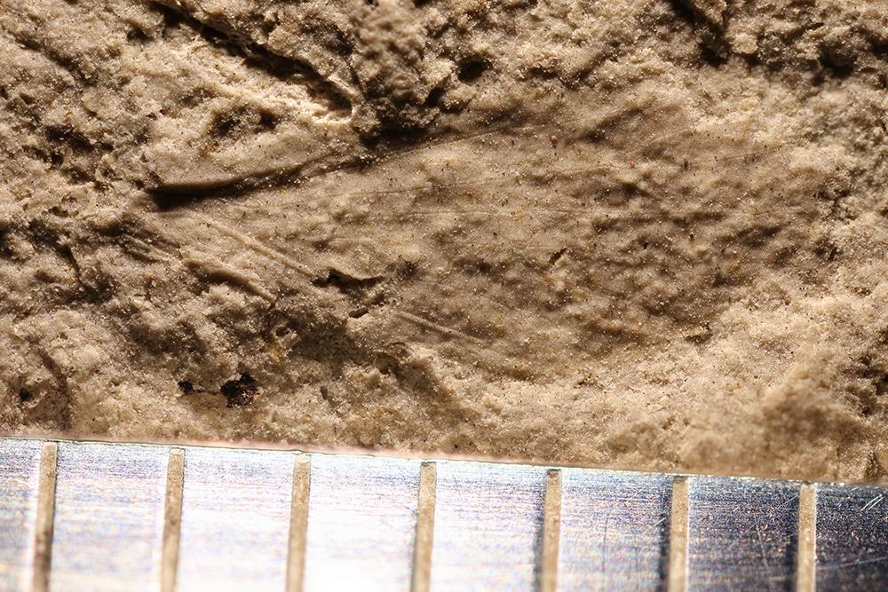 http://mczbase.mcz.harvard.edu/specimen_images/entomology/paleo/large/PALE-32633_Lemmatophoridae_2.jpg