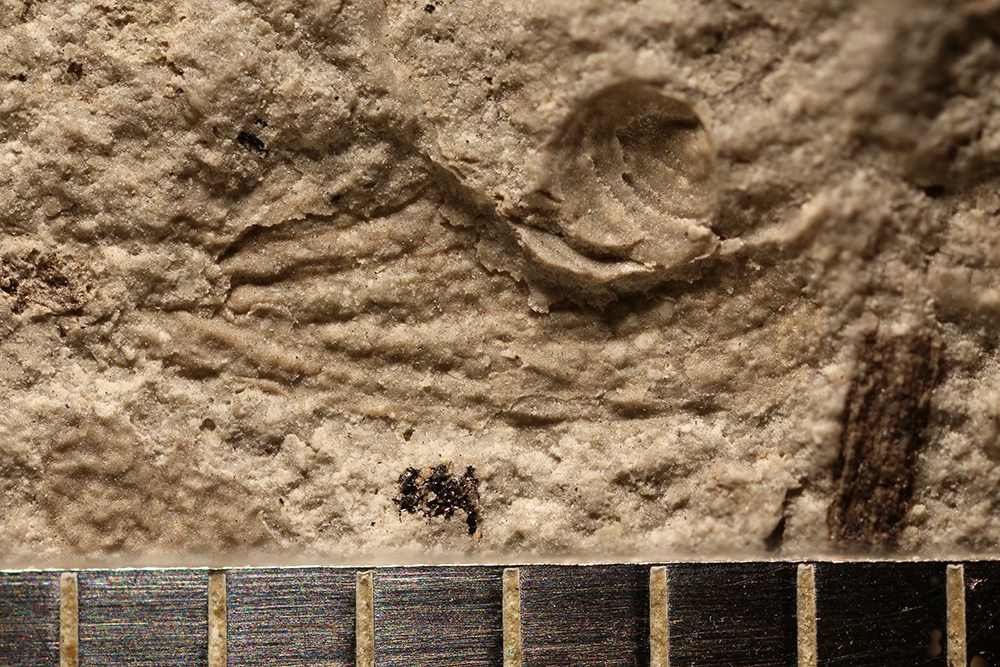 http://mczbase.mcz.harvard.edu/specimen_images/entomology/paleo/large/PALE-32689_Ephemeroptera_det_nwp_2.jpg