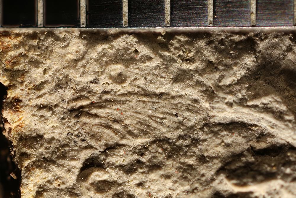 http://mczbase.mcz.harvard.edu/specimen_images/entomology/paleo/large/PALE-32712_Ephemeroptera_2.jpg
