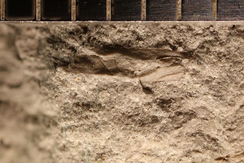 http://mczbase.mcz.harvard.edu/specimen_images/entomology/paleo/large/PALE-32720_Hemiptera_2.jpg